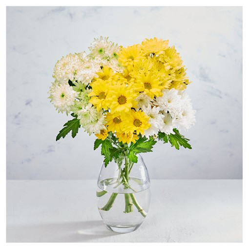 Picture of Co-op Mixed Chrysanthemums