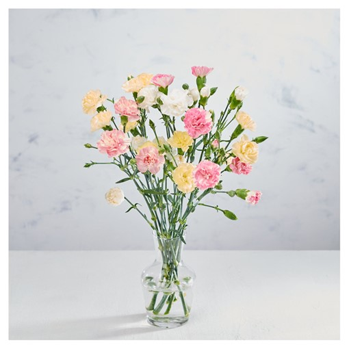 Picture of Co-op Colourful Carnations
